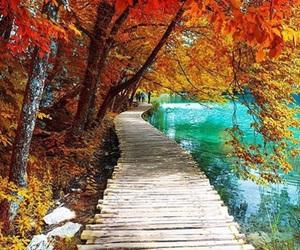 autumn, nature, and Croatia image