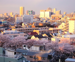 cherry blossom, city, and japan image