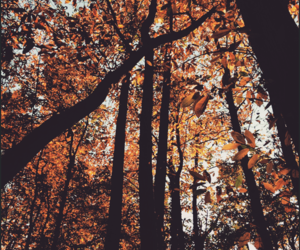 fall and forest image