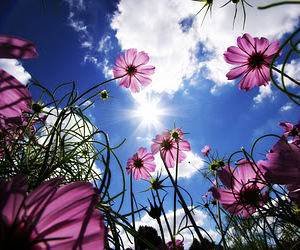 flowers, sky, and sun image