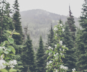 nature, tree, and flowers image