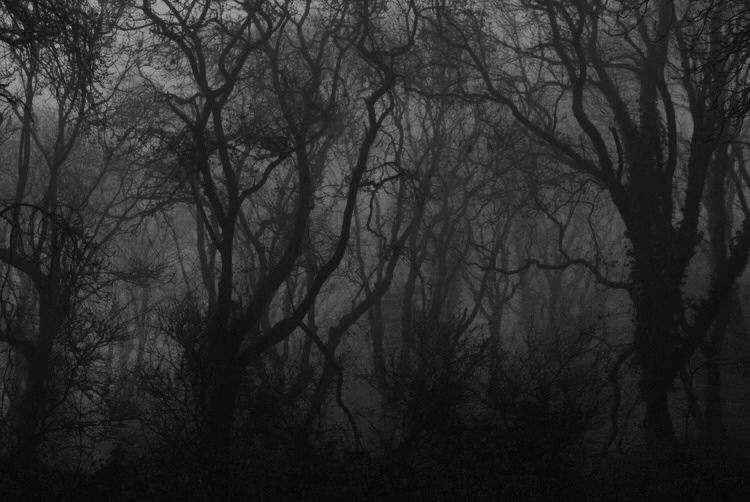trees, black and white, and dark image