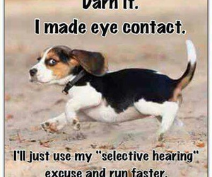 beagle, quote, and dog image