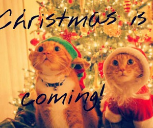 cats, christmas, and frase image