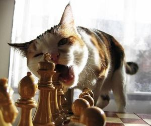 cat, cute, and chess image