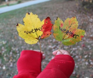 leaves, sweater, and cozy image