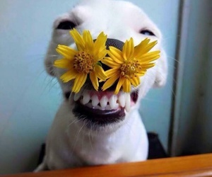 dog, yellow, and cute image