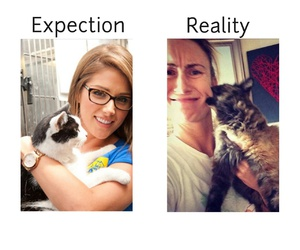 aggressive, cats, and reality image