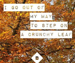 autumn, Citations, and fall image