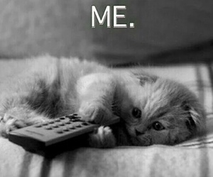 cat, just like me, and cute cat image
