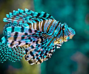 fish, animal, and cool image