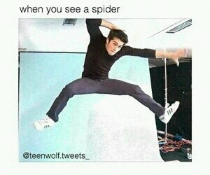 teen wolf, spider, and funny image
