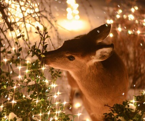 christmas, deer, and light image