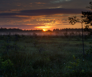 art, morning, and sunrise image