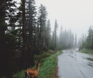 deer, nature, and forest image