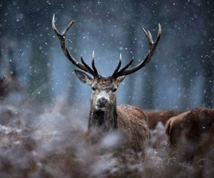 deer, animal, and snow image