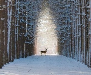 winter, snow, and deer image