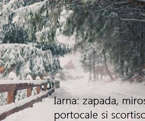 christmas, snow, and craciun image