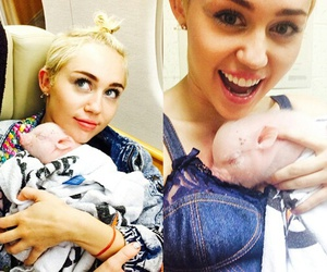 miley cyrus, pig, and miley image