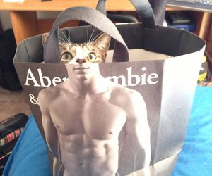 body, cat, and funny image