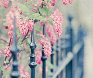 flowers, pink, and fence image