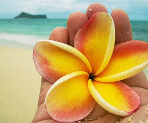 flower and hawaii image