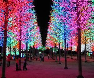 tree and lights image