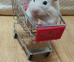 funny, hamster, and lol image