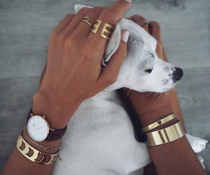 adorable, animal, and cartier image