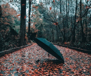 autumn and umbrella image