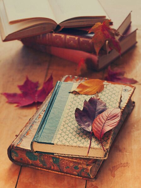 autumn, forest, and notebook image