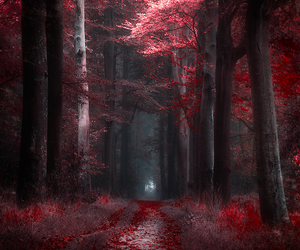 forest, red, and tree image