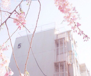 pink, aesthetic, and flowers image