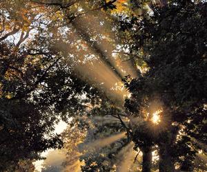 trees, autumn, and beautiful image