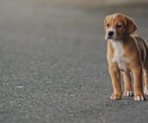 dog, dan shay, and nothin' like you image