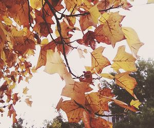 autumn, hipster, and leaves image