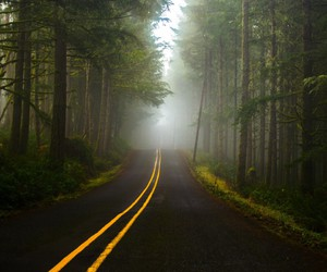 forest, road, and fog image
