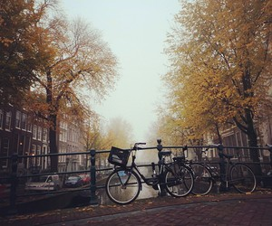 autumn, leaves, and bike image
