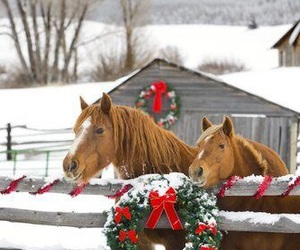 horse, christmas, and winter image