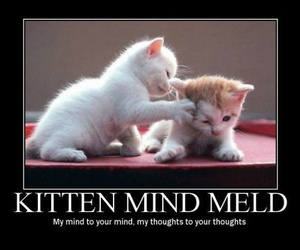 kittens and star trek trick image