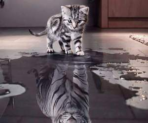 cat, tiger, and animal image