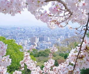 flowers, nature, and city image