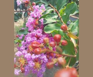 brasil, flower, and flowers image