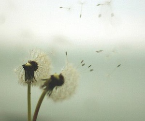 dandelion, nature, and flowers image