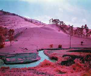 pink, landscape, and nature image