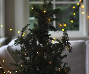 christmas, tree, and lights image