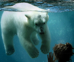 Polar Bear and get in the car image