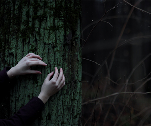 dark, forest, and hands image