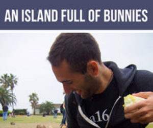 bunny, exists, and funny image