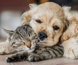 dog, cat, and cute animals image